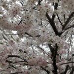 季節を感じる<桜編>